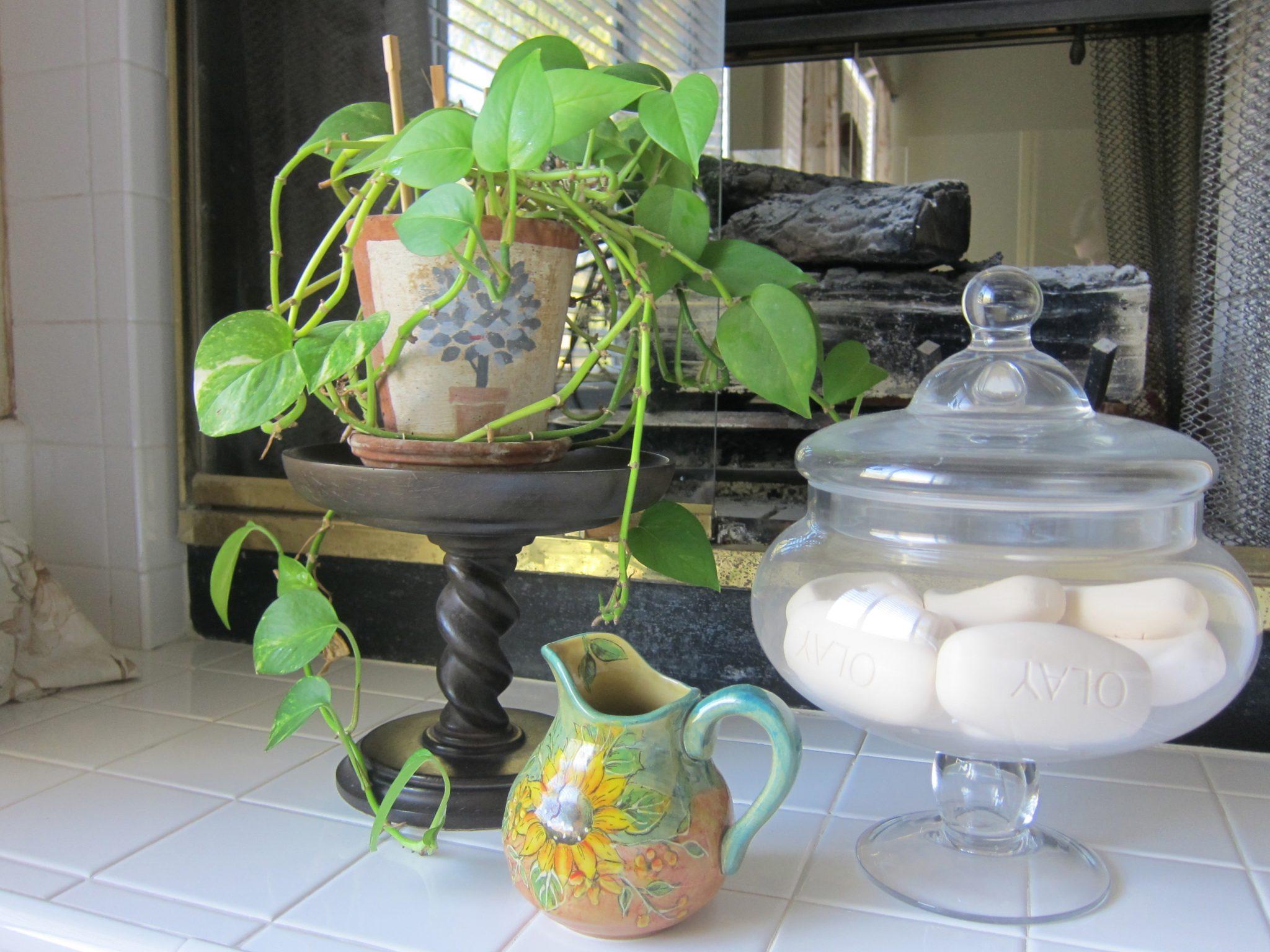 Golden Pothos plant.